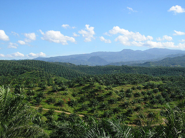 A-palm-oil-plantation-in-Indonesia[1]
